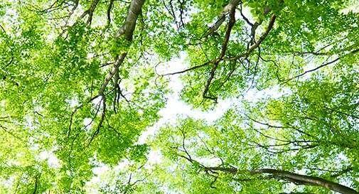 Mappa degli alberi