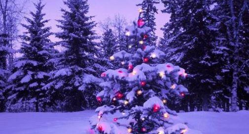 Ruba un albero di Natale, viene ripreso e postato su Facebook VIDEO