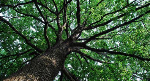 Nasce un bambino e si pianta un albero: si sfiora quota quattrocento