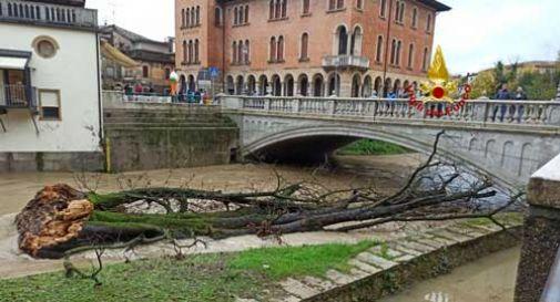 Il vento si abbatte su Pieve di Soligo, caduto l'ippocastano secolare. - Oggi Treviso