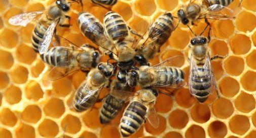 Skock anafilattico, apicoltore fuori pericolo