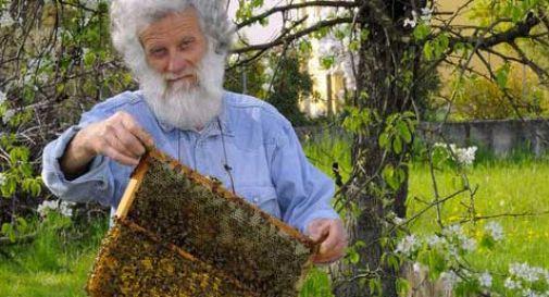 Moria di api sul Montello: sotto accusa vigneti e patate