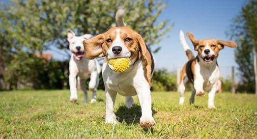 """""""Area cani"""" anche a Montebelluna"""