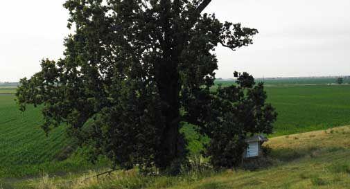 Una mostra sulla grande quercia che