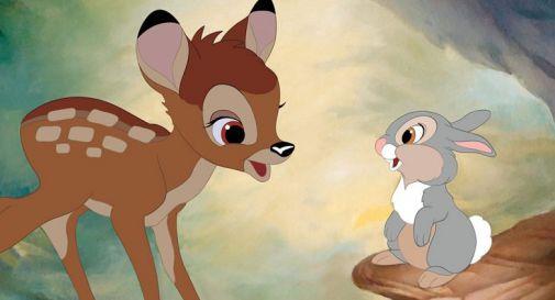 Uccide centinaia di cervi, bracconiere condannato a guardare Bambi una volta al mese