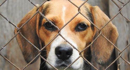 Ricerca: protesta contro uso di cani beagle in sperimentazione