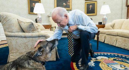Biden, è morto il cane Champ