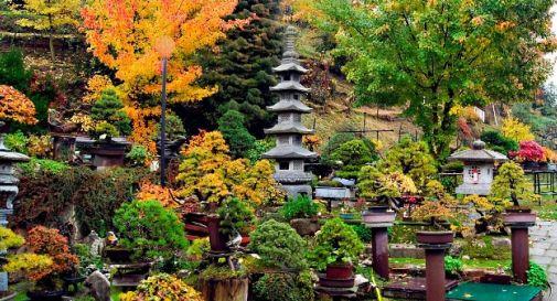 Spariscono i bonsai al Giardino Museo della Serenità di Tarzo