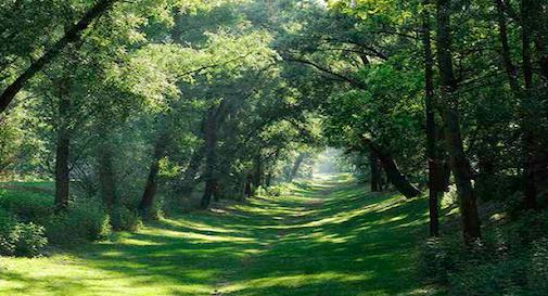 Un nuovo bosco urbano a Zero Branco
