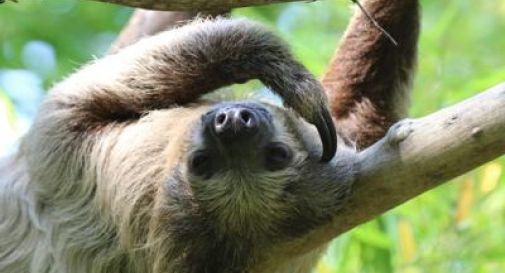 Abbracci e selfie su Instagram, nuove minacce per il bradipo
