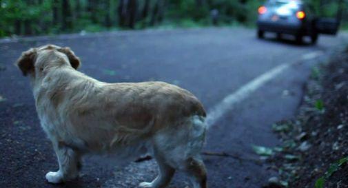 Abbandona il cane, ma la targa dell'auto viene segnalata alle autorità