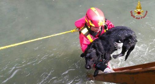 Cane finisce nel canale Brentella, salvato dai vigili del fuoco