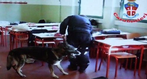 Il cane fiuta la droga tra due armadi maria nascosta in for Armadi treviso