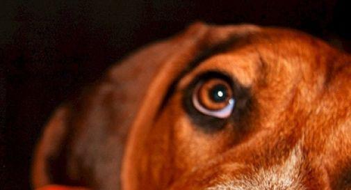 """""""Attenti, vi ammazzo il cane se lo trovo ancora in strada"""""""