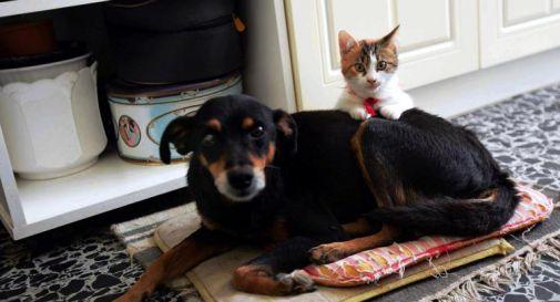 Curare gli animali con farmaci a uso umano? Ora è possibile