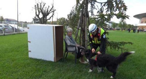 Alzhaimer, i cani della Protezione Civile di Treviso addestrati a ritrovare le persone che  scompaiono da casa
