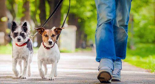 A Spresiano arrivano i dog sitter per chi è impossibilitato ad uscire da casa