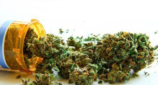 Sempre più italiani scelgono cannabis legale con alto tasso CBD