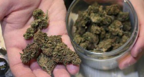 liberalizzazione della cannabis