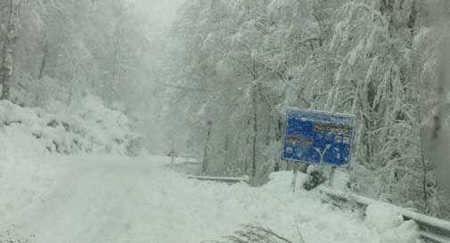 Oltre mezzo metro di neve in Cansiglio, saltate le linee della luce e del telefono