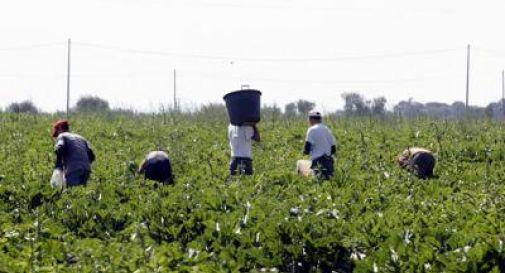 Immigrati al lavoro nei campi in nero, imprenditrice trevigiana nei guai