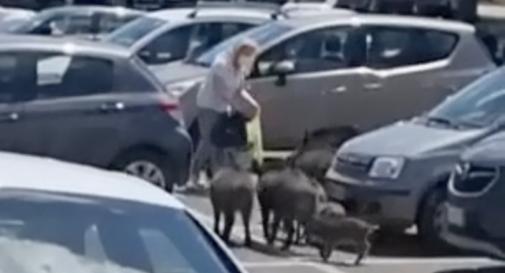 Donna rapinata da una banda di cinghiali fuori dal supermercato VIDEO