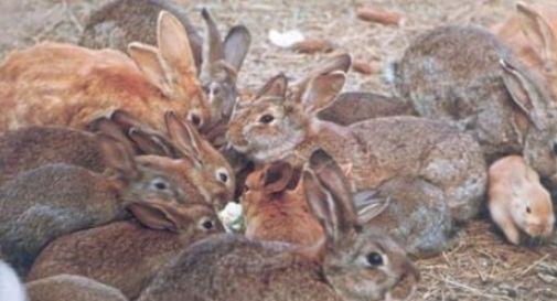 Allevatori conigli: «Organizzarsi per non chiudere stalle»