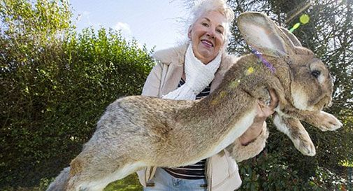 Spende quasi 7.000 euro all'anno per nutrire il coniglio (video)