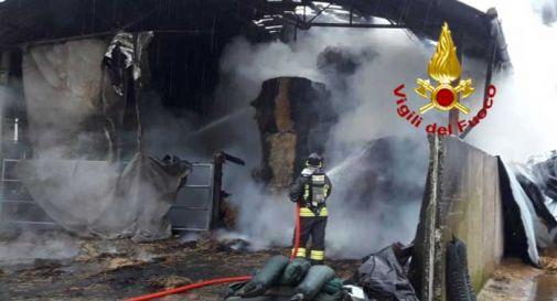 Stalla in fiamme a Breda: in pericolo il bestiame