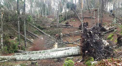 Devastazione in Cansiglio, fino a 20mila piante crollate per il maltempo
