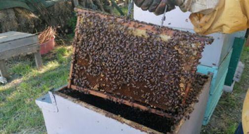 L' apicoltura arriva nelle scuole: lettera ai 44 Comuni della Sinistra Piave