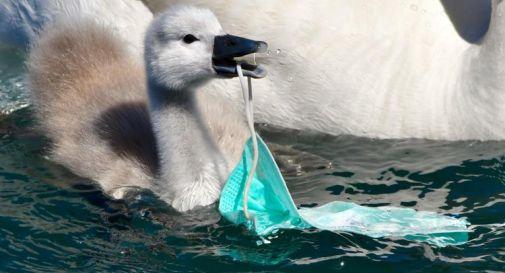 Mascherine e plastica, il Covid frena la lotta all'inquinamento