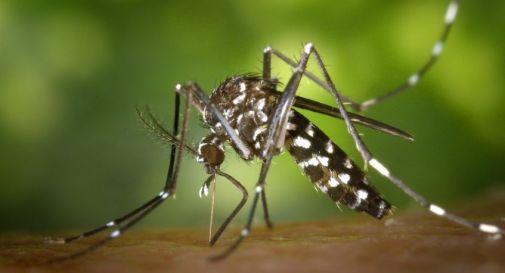 Rischio zanzare tigre, a Treviso parte la disinfestazione nei tombini e fossati