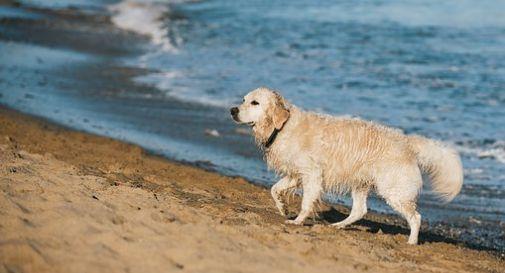 No a un'altra spiaggia per cani, a Bibione parte la raccolta firme