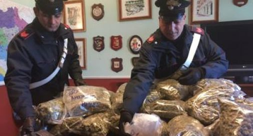 Roma, fiumi di droga sotto l'albero: 33 arresti e sequestrati 75 kg