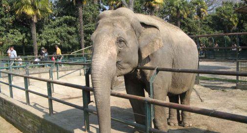 Bimba uccisa da un elefante allo zoo
