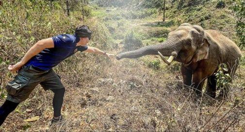 elefante amico