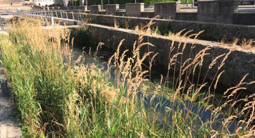 L'erba infestante invade i Meschietti, cittadini indignati
