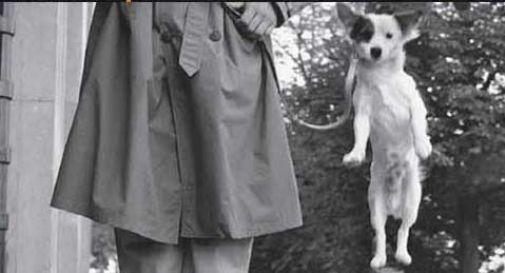 Giornata mondiale del cane, Treviso la celebra con le foto di Erwitt