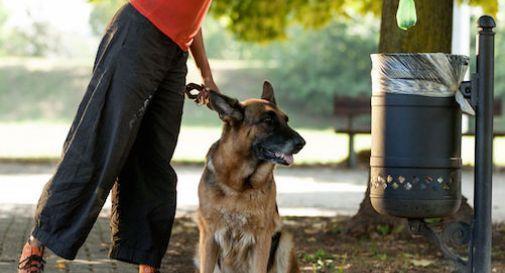 Non raccoglie le feci del cane: 400 euro di multa a Treviso