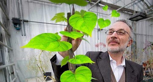 Il noto neurobiologo vegetale Stefano Mancuso
