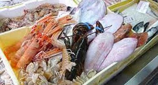 Sequestrate 22 tonnellate di pesce scaduto in Veneto