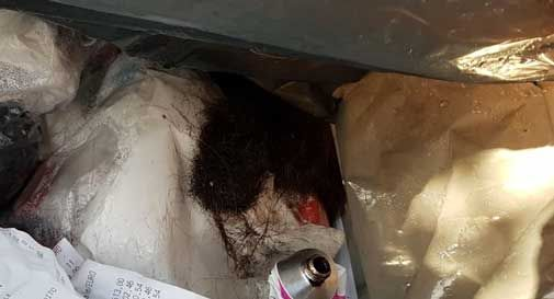 Santa Lucia di Piave: capelli e scontrini tra i rifiuti, multato parrucchiere. Szusmki: