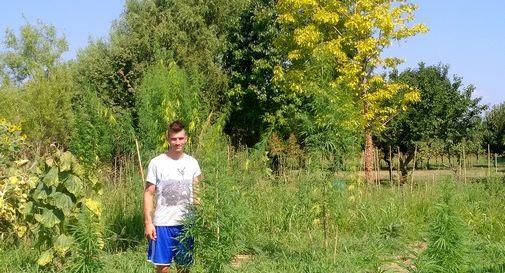 La battaglia contro i pregiudizi di un agricoltore castellano che coltiva canapa, per dare un futuro migliore all'azienda di famiglia