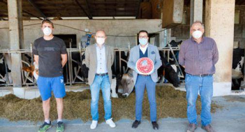 """È nato l' """"Angelico di Montagna"""", primo formaggio che premia i produttori di latte della Pedemontana"""