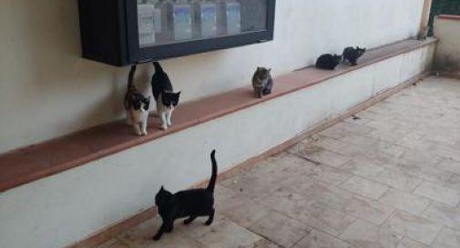 Sette gatti murati vivi, 'davano fastidio al condominio'