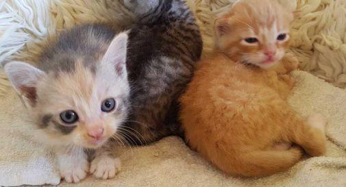 A Vittorio Veneto e Conegliano boom di gatti abbandonati