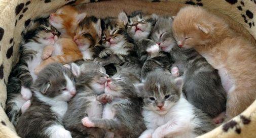 Lancia gattini neonati nel fossato, denunciato 17enne