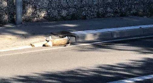 Gatto morto rimane per giorni in strada, scoppia la polemica