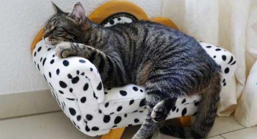7 consigli per vivere in armonia con il gatto